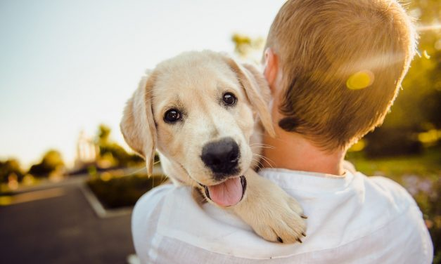 Dating: LGBTQ Relationships Strengthened By Adopting A Dog